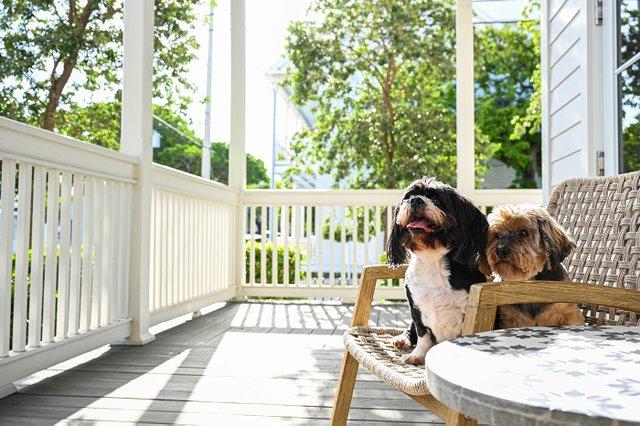 Marker Key West Hotel Pets.jpg