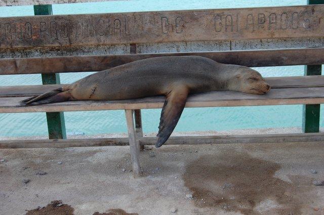 5. Anita Warnet - Galapagos Naptime.JPG