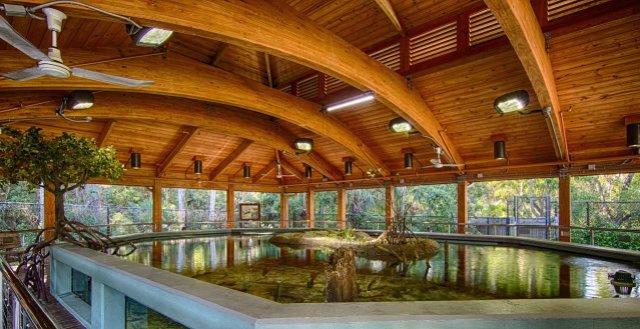 Gumbo-google 360 mangrove tank_web.jpg