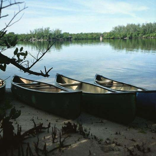 Gumbo-mangrove paddle program_web.jpg