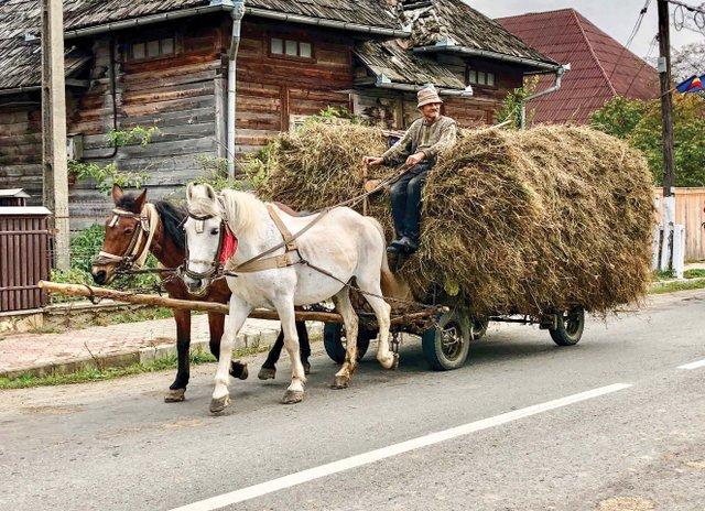 Hay Cart_web.jpg