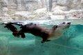 Otter_web.jpg