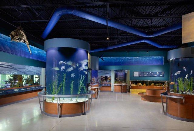 aquarium_low_web.jpg