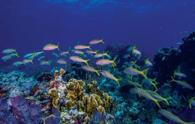 biscayne underwater-edit_web.jpg