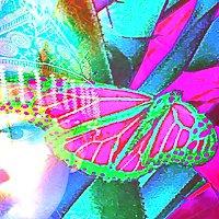 Siegel_Painting_on_Photographs_200x200px.jpg