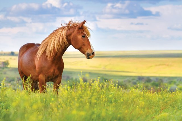 home page horse image.jpg