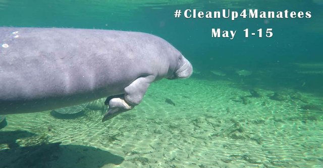#CleanUp4Manatees.jpg