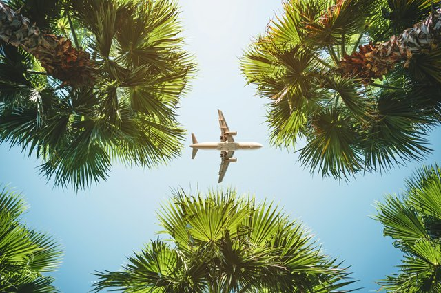 Travel_Airplane_Palms_iStock-1066253974.jpg