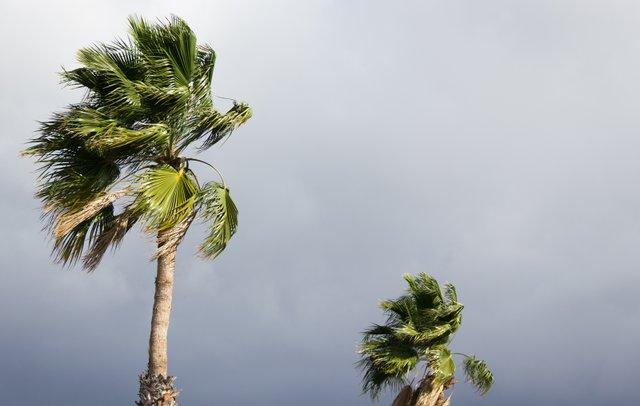Hurricane_PalmTree_iStock-996797474.jpg