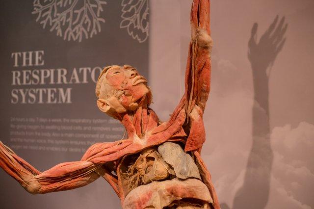 Respiratory2.jpg