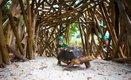 Nature Play Tortoise_web.jpg