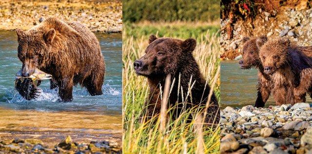BocaRatonObserver_Alaska5.jpg