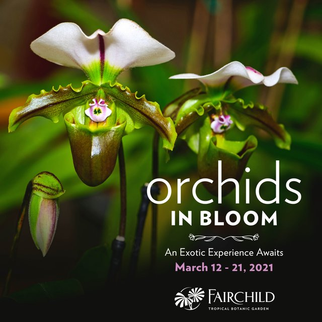 Orchids in Bloom_IGpost.jpg
