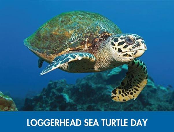 Loggerhead-Day.jpg